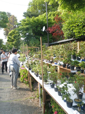盆栽町の盆栽祭